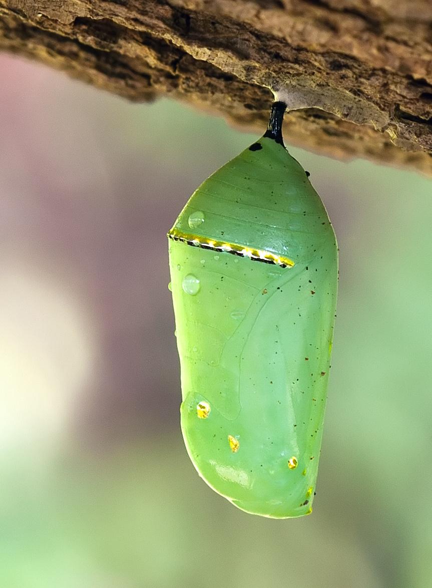 Resultado de imagem para butterfly in head gif